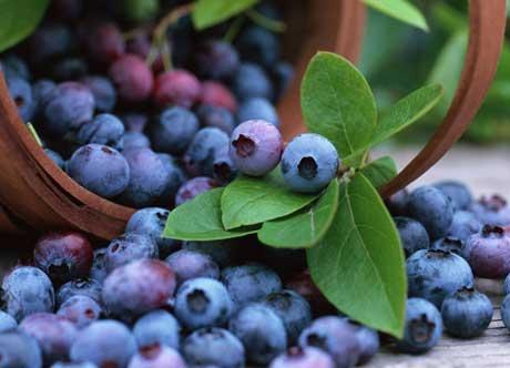 Blåbär – en kraftfull antioxidant