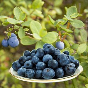 Skål med blåbär