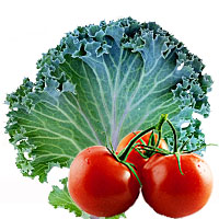 Grönsakspulver – Tomat eller Grönkål?